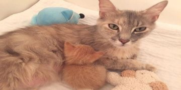 Grieving Mama Cat Gets The Best Mother's Day …