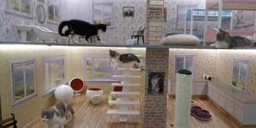 New Reality Show Of Kittens Living In A Dollhouse!