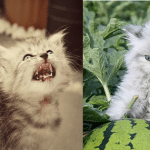 15 Grumpy Cats That Will Leave You Laughing