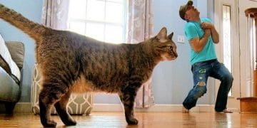 This Guy Tries Faking His Own Death In Front Of His Cat, And No One Expected Her Reaction!
