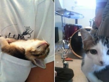 10+ Adorable Adorable Cats 'Hanging Out' in Pockets
