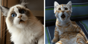 10 Cats Who Just Realized What Vets Did to Them!