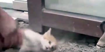 Kitten Cries For Help Through Glass Panel As Rescuers…