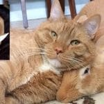 Ginger Cat and His Giant Rabbit Twin Brother share a Special Bond!