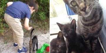 Stray Cat Brings Her Babies To The Campers Who Fed Them