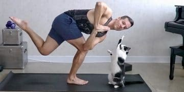 Cats And Yoga? Yes, Please!