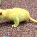 Orphaned Kitty Born with Only 2 Legs Wants Nothing More Than To Live