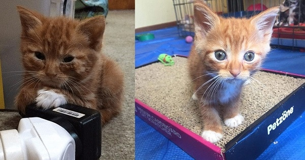 Fluffy Kitten Didn't Grow Like The Rest Of The Litter, But Still Found Love In A New Home