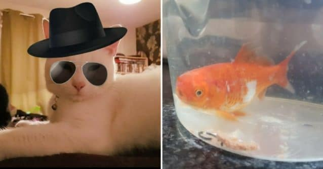Cat Brings Home A New Pet and Surprisingly, It's A Fish!