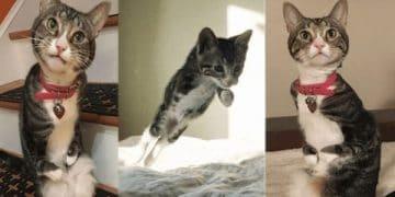 Meet Kanga – The Kitty With Bent Front Legs Who Hops Like a Kangaroo!