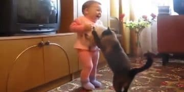 Little Kid Grabs Newborn Kitten, But Watch The Mama Cat!