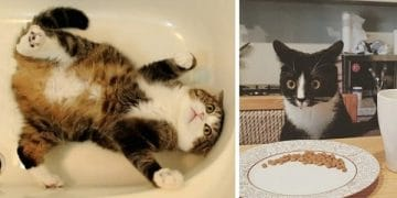 10+ Cats Who Are Struggling To Figure Out This World