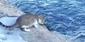 Cat Keeps A Close Eyes On The Water – Wait Until You See Why