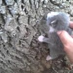 Barely a Day Old Kitten Began Climbing the Tree, Looking for its Mother and Food