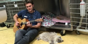 Cat Gets Surgery And To Soothe It, This Vet Does The Sweetest Thing …