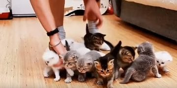 This Is What Happens When You Try Getting 10 Tiny Kittens To Sit Still To Take A Photo
