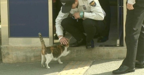 Stray Mama Cat Brings Her Family to Police Station That Becomes Their Home
