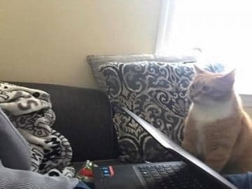 Cat Won't Stop Staring At His Human Mom Who Gave Him a Forever Home