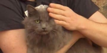 One-Eyed Cat Heroically Alerts Owner to Intruder in His Home