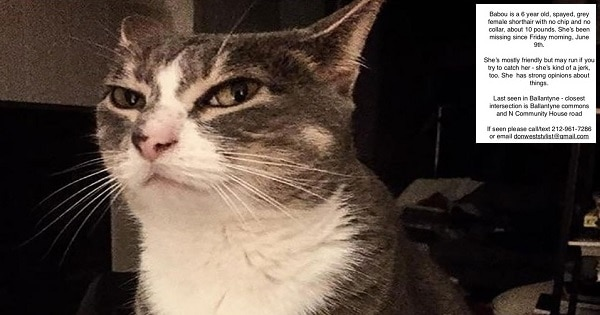 Cat Returns Home After Her Human Posts Missing Signs Calling Her a 'Jerk'!