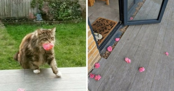Amazing Cat Brings Pink Flowers To Neighbours From Her Garden Everyday