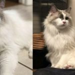 Family Surrenders Cat And Asks Shelter To Put Him Down Because He Is Too Playful