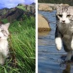 Meet Nyankichi – The Most Photogenic Cat in the World