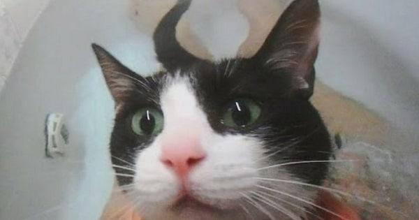 """This Kitty Runs To The Bathroom When She Hears """"Bath Time"""""""