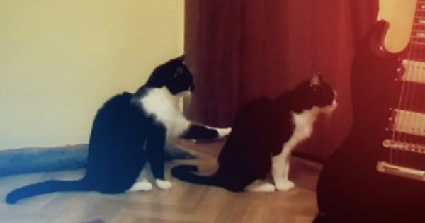 Cat Tries to Apologize to Another Kitty And It's Super Hilarious!