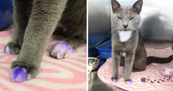 If You See A Cat With Purple Paws, Pick It Up And Take It To The Nearest Shelter ASAP