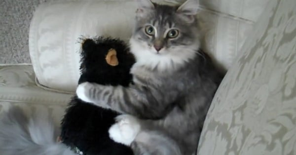 Man Gives His Kitty A Stuffed Teddy Bear – When The Cat Realises How Special It Is, She Won't Let Go!