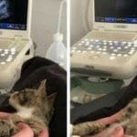 Cat Has Best Reaction To Finding Out She's Pregnant
