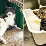 10+ Pics Proving That Cats Are The Cutest Animals On Earth!