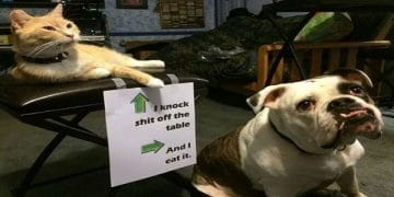 14 Times People Shamed Their Fur-babies In The Most Hilarious Ways!