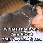 18 Cats That Simply Don't Care About Your Personal Space!