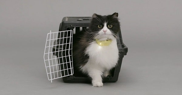 Cat Collar Translates Meows Into Human Speech