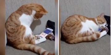 Cat Reacts To Seeing His Deceased Human In A Video!