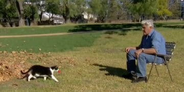 Jay Leno Proves Cats Are Truly Smarter Than Dogs In This Funny Video!