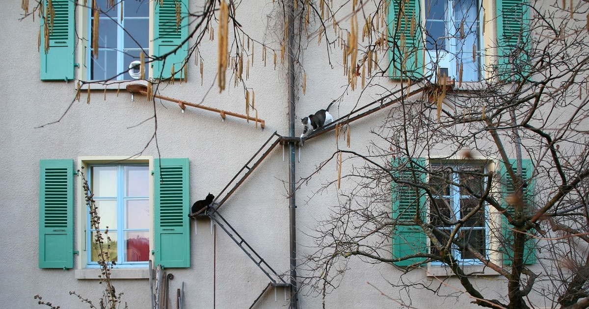 Upcoming Book Explores the Wide Range of Charming Homemade Cat Ladders in Switzerland