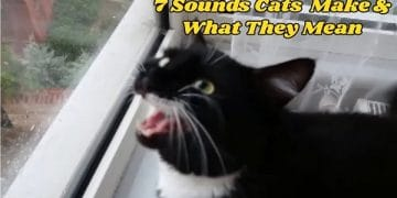 7 Sounds Our Cats Make and What They Mean!