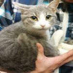 Adorable Kitty Jumps Into The Arms Of A Man And Simply Won't Let Go