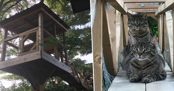 Cat Daddy Builds Epic Outdoor Construction For Cats So They Can Always Be Safe!