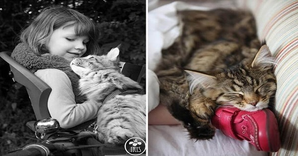Cat Helps A Little Girl With Autism Live Her Life To The Fullest!