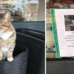 Cat Pretended To Be A Homeless Stray To Get Free Food And Cuddles From Shoppers!