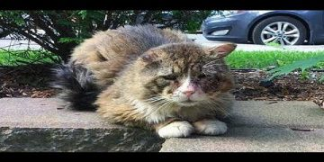 Cat With Sad Expression Lived a Hard Life But Finally Gets Happiness Back into His Beautiful Eyes