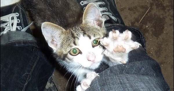 Family Finds Homeless Kitten On Side Of Road - One Problem: They Had Dogs!
