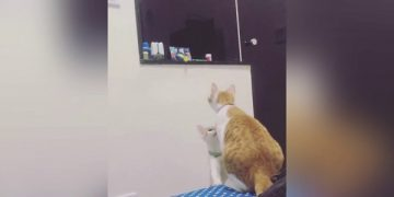 Mama Cat Retrieves Toy For Her Kitten