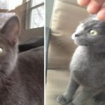 Pregnant Cat Invaded a Guy's House and Turns His Life Upside Down