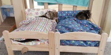 Shelter Cats Curl Up on Donated IKEA Beds – Be Sure To Watch The Adorable Clip