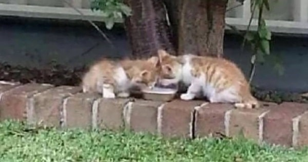 Woman Finds Blind Twin Kittens That Were Guiding Each Other Through The World